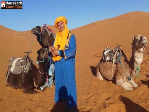 3 days from marrakech to merzouga camel trekking