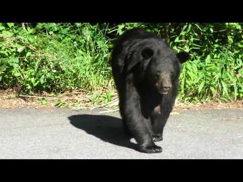 Life with Bears