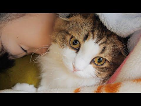 毎朝家族を癒してくれるもふ猫のモーニングルーティン