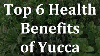 Top 6 Health Benefits of Yucca - Health Benefits of Yucca