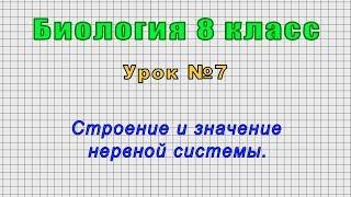 Биология 8 класс (Урок№7 - Строение и значение нервной системы.)
