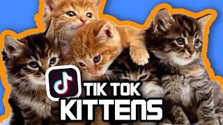 KITTENS of TIK TOK! Cute Kitten Memes to Butter Your Beans.