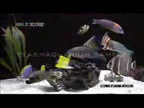 plasmaquarium aquarium dvd
