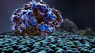 Биохимия скоростно-силовой тренировки самбистов