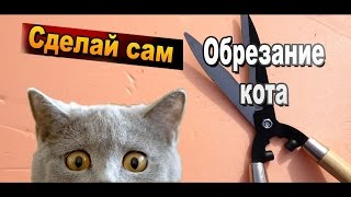 Как стричь когти кота или кошки своими руками