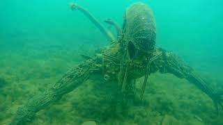 """Чудовища на дне Черного моря недалеко от побережья Анапы. Нашли """"Чужих"""" в Черном море."""
