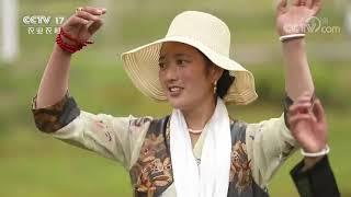 《中国三农报道》 20201217|CCTV农业 - YouTube