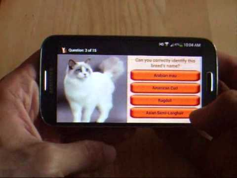 Domestic Cat Breeds Mobile App on Google Play