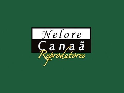 Lote 05   Hedes FIV AL Canaã   NFHC 1090 Copy