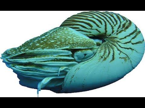 Справка. Советник Nautilus. Настройка трейлинга для стопа и отложенных ордеров.