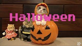 猫たちのHalloweenコスプレ