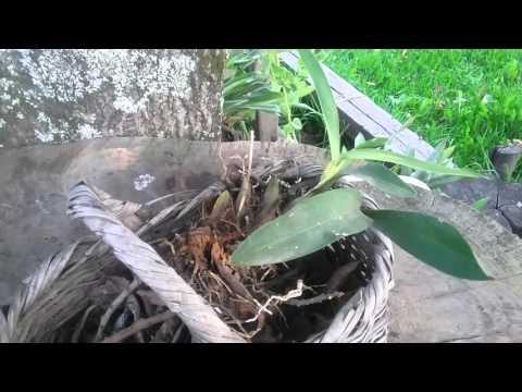 Como sembrar orqu deas en macetas doovi - Como cuidar orquideas en maceta ...