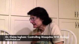 How To Control Mosquitos without Pesticides with Compost Tea