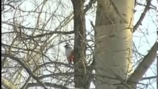 Времена года  Зима  зимующие птицы(, 2013-01-22T12:20:42.000Z)