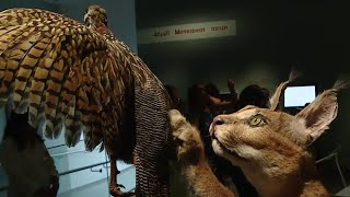 Israel Opens First Natural History Museum in Middle East