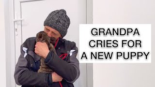 Dog Grandparents Start Crying After Meeting A Puppy