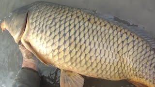 Bait Fishing #76 - White Sucker and Common Carp Fishing with Worms