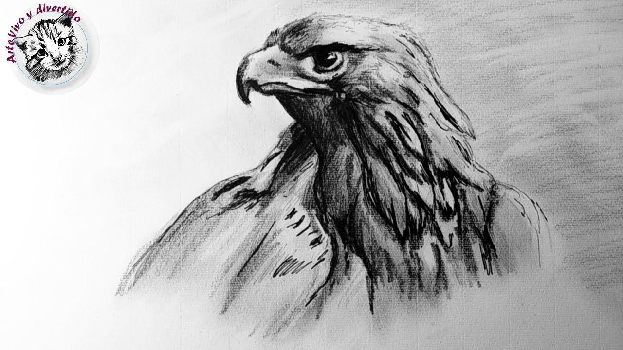 Como Dibujar un Aguila Realista Paso a Paso | tecnicas de dibujo ...