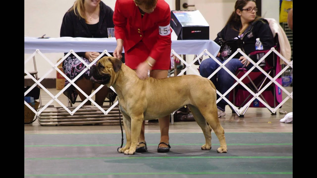Mission Circuit Dog Show