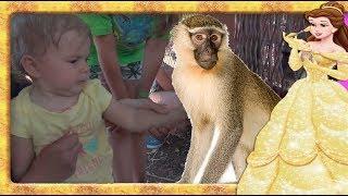 Maimuta hoata  Anabella Show si Bogdan`s Show hranesc maimutele cu seminte