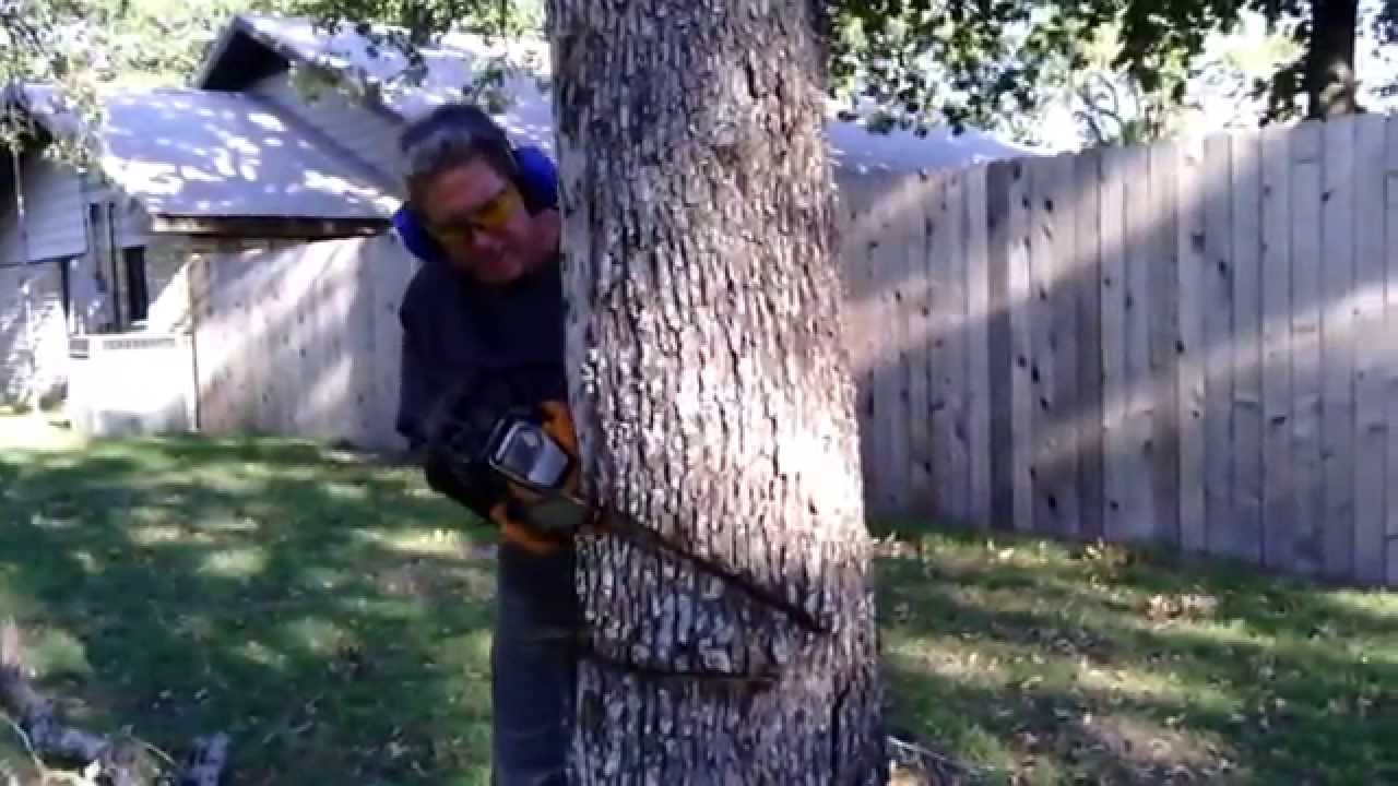 Tree cutting accident