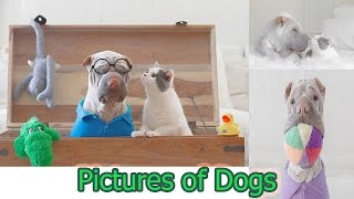 Pictures Of Dogs - Pet And Cat