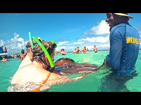 Stingray city on Antigua island 2⃣0⃣1⃣7⃣ Caribbean underwater show. Ласковый скат.