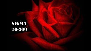 Sigma 70 - 300 F/4 - 5.6 DG Macro Lens - Full Review !!