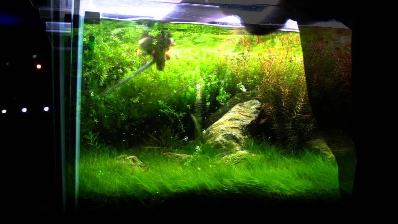 FishPlanet Aquarismo - Aquario da Loja pt/Final