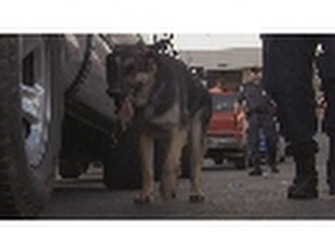 The Cold Nose of Justice  Blue Collar Dogs