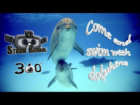 [VR 360] COME and SWIM with DOLPHINS – VR Studio Records
