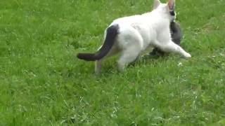 кошка несёт котенка