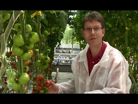 Online Master: Plant Breeding | Wageningen University