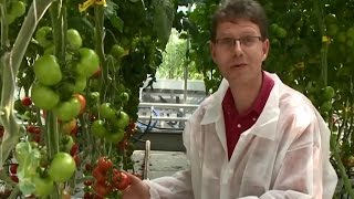 Online Master: Plant Breeding