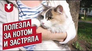 Забавное видео: спасатели изУфы сняли сдерева застрявшего кота… иего хозяйку