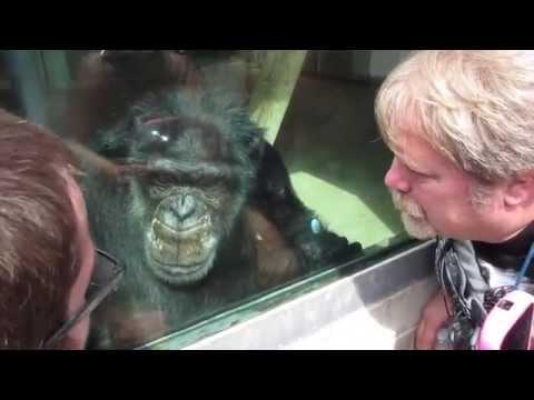 WILD ANIMAL INSTINCTS! Black Pine Animal Sanctuary Albion Indiana