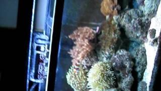 33 gallon saltwater aquarium