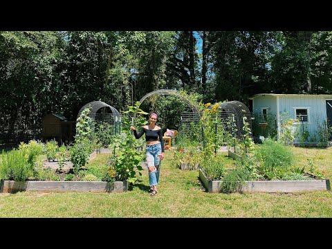Spring Garden Tour: 4| North Florida Gardening