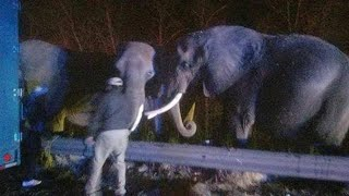 Elephants Wait Patiently at Tennessee-Georgia State Line as Fire Burns Nearby