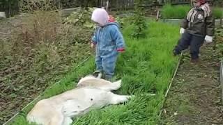 Ребенок хотел погладить собаку, собака чуть не кинулась на ребенка