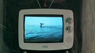 YB- 흰수염고래(Blue Whale) Official MV