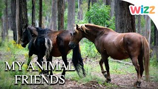 My Animal Friends - A Brumby (Australian Horse) | Wizz | TV Shows for Kids