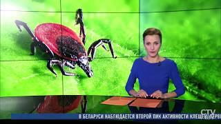 Внимание! Второй пик активности КЛЕЩЕЙ в Беларуси