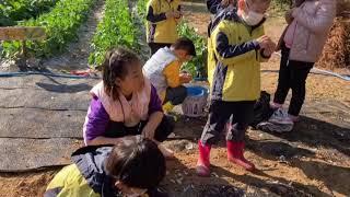 """마늘, 양파 심기 """"planting garli…"""