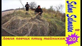 Ловля певчих птиц тайником - Щеглы, Коноплянка . 20 часть