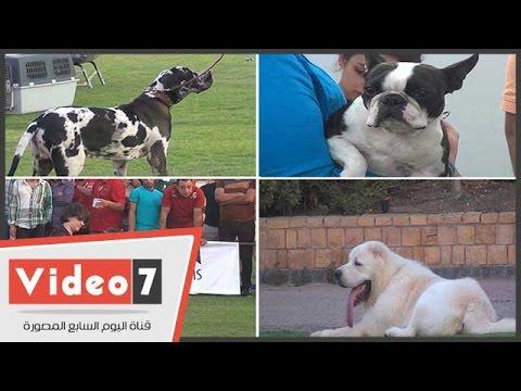 اليوم السابع : بالفيديو.. منافسة قوية فى مسابقة