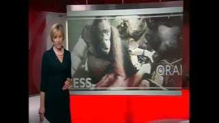 International Animal Rescue on BBC South East News 21 June 2012