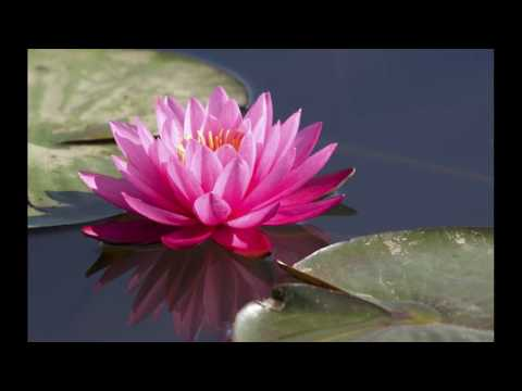 Lotus For Hair Care