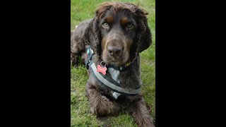 Charlie & Me review Curraghchase Campsite Co. Limerick
