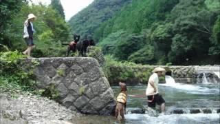 黒ラブ、エルモとアイリッシュセターのティナを連れて川遊びに行きました.
